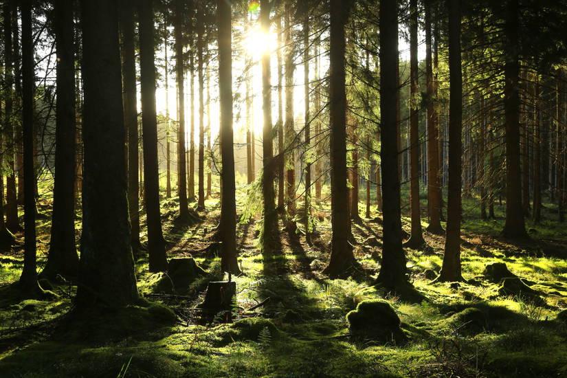 9c13b2127e1f51 Inmitten des Naturschutzgebietes Liesetal zeigt sich das Sauerland Sommer  wie Winter von seiner schönsten Seite. image-1209
